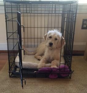 Lulu loves her crate!